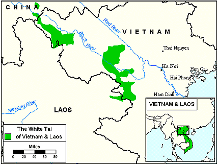 Tai Kao in Laos